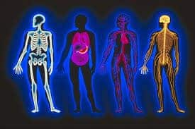 Body bones, organs and muscles pictorial. Study anatomy and physiology at Bali BISA, Sanur